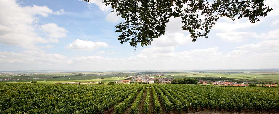 Champagner-Dorf der Extraklasse: Le Mesnil-sur-Oger