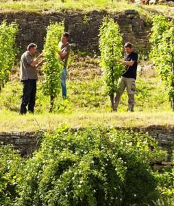 Weingut Luckert